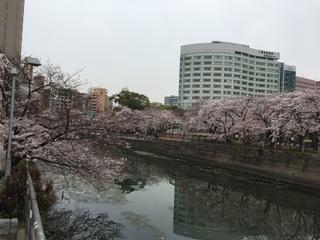 桜.2016.1.jpg